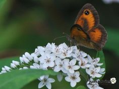 Een foto uit de tuin van Juliennevanhout2