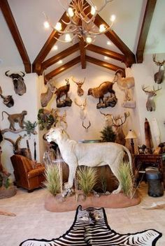 Cool mounts! Trophy Hunting, Bow Hunting, Albino Deer, Taxidermy Display, Deer Mounts, Trophy Rooms, Post Animal, Cute Animal Pictures, Color Of Life