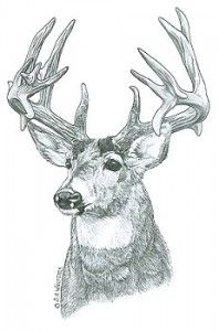Deer Wood Burning Pattern