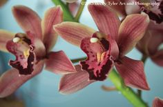 Pink Cymbidium Orchid Photo Print by BeckyTylerArt on Etsy