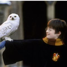 Hedwig is my favourite kind of owl