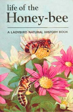 ≗ The Bee's Reverie ≗  Life of the Honey-bee | A Ladybird Natural History Book