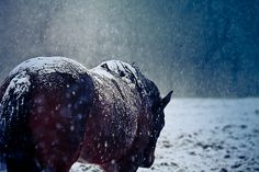 xantheose: The Last Goodbye (by Standard Deluxe) All The Pretty Horses, Beautiful Horses, Animals Beautiful, Cute Animals, Funny Animals, Horses In Snow, Wild Horses, Horse Girl, Horse Love