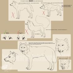 drawing tips - wolf [狼の描き方] Drawing Techniques, Drawing Tips, Drawing Reference, Drawing Sketches, Pose Reference, Animal Sketches, Animal Drawings, Art Drawings, Drawing Faces