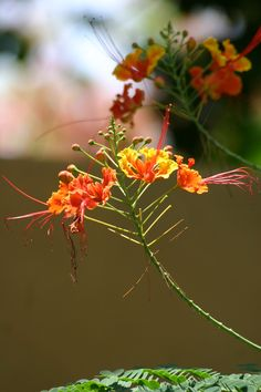 nature is one of the things I love about CR. The most humble of homes has beautiful flowers somewhere around it.