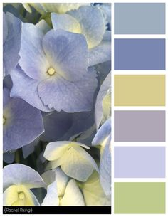 Purple Flowers Color Scheme, #colorscheme