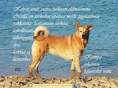 Finnish Words, Corgi, Animals, Animales, Animaux, Corgis, Animal, Animais