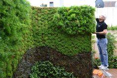 jardin vertical horta - verdtical