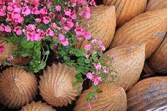 terracotta pine cone for the Garden, Photos, Eindrücke & Sonstiges - Fotos von Kunden und anderen