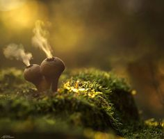 German photographer Martin Pfister captures whimsical macro photos of mushrooms. He illuminates the fungi from behind using tiny LED bulbs, casting an enchanting glow on the subjects Puffball Mushroom, Mushroom Spores, Mushroom Art, Glowing Mushrooms, Mystical World, Mystical Forest, Fotografia Macro, Mystique, Amazing Nature