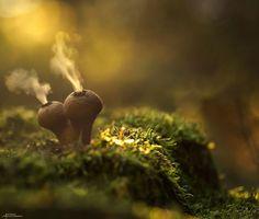Le monde mystique des champignons capturé en photos. De véritables villas pour les Schtroumpfs !