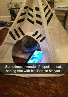20 Cat Snaps That Will Make You Want a Cat Right Meow – Meowingtons