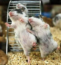 dancing hamsters(: