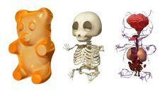 Gummi Bear Anatomy - Moist Production