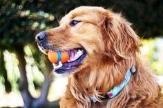 Cute Dogs Pics (12)