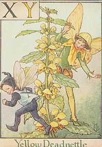 xY is For Yellow Deadnettle- by Cicely Mary Barker