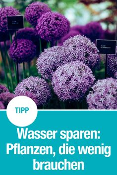 Pflanzen mit geringem Wasserbedarf - GARDENA - Wasser sparen leicht gemacht mit diesen Pflanzen: Unsere liebsten und schönsten Pflanzen für den G - Garden Care, Diy Garden Projects, Diy Garden Decor, Herb Garden, Garden Pots, Rocks Garden, Water Garden, Outdoor Plants, Outdoor Gardens