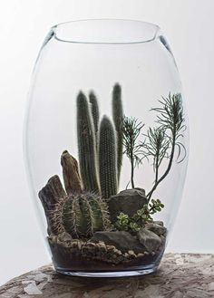 Amazing Glass Terrarium - Hermetica London