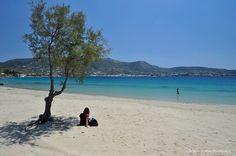 Martselo beach, Paros-Greece Mykonos, Santorini, Paros Island, Island Beach, Paros Beaches, Paros Greece, Chios, Greece Wedding, Greek Islands