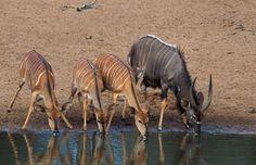 Mkhuze_Game_Reserve Game Reserve, Kangaroo, Games, Animals, Baby Bjorn, Animales, Animaux, Gaming, Animal
