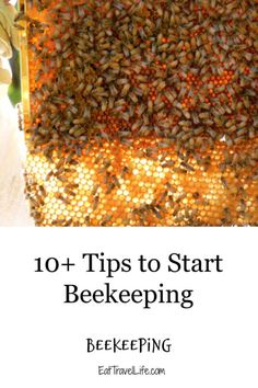 Are you interested in beekeeping? We have 10 detailed tips to consider before you start beekeeping. Get your own honey bees and honey. #honeybees #beekeeping #startbeekeeping #beehive #beekeeping101 #howtokeepbees Gardening For Beginners, Gardening Tips, Homestead Farm, Deck Decorating, Covered Decks, Honey Bees, Hobby Farms, Beekeeping, Beehive