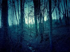 Are you brave enough to explore these spooky woods and forests this Halloween?