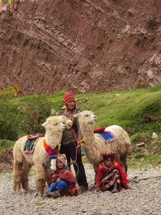 A typical Andean scene on the road. Machu Picchu, We Are The World, People Around The World, Alpacas, Latin America, South America, Photos For Class, Argentina Culture, Animals And Pets