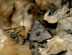 Ilmenite, Fe2+TiO3, Albite (Var: Oligoclase), Actinolite, Montijos quarry, Monte Redondo, Leiria, Leiria District, Portugal. Ilmenite crystal width 3mm. Copyright © Photo & Collection of Martins da Pedra