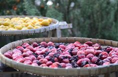 Unsurpassed Health Benefits of Dried Plums