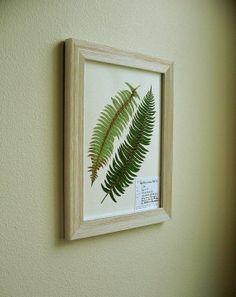 Real Pressed Botanical Art, Original Herbarium Specimen Art: Western Sword Fern, 11x14 Framed