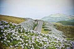Faial (Azores) by pisitoenmadrid, via Flickr