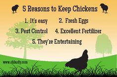 Part one of a series on keeping chickens. A practical guide to keeping chickens.