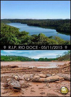 """#NãoHáDinheiroQuePague - A lama """"cimentou"""" o bioma e pode até ter causado a extinção de animais e plantas que só existiam ali - a natureza local morreu soterrada. O Ibama e a Advocacia-Geral da União (AGU), estão elaborando uma ação por danos coletivos contra a Samarco. O cálculo dos valores envolvidos ainda depende de avaliações do Ibama, mas, segundo fontes do governo federal, o valor total pode chegar a R$ 10 bilhões. #RIP #RioDoce #Negligência #Samarco #Vale #BHPBilliton Imagem e Texto…"""