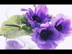 purple in free-hd wallpapers