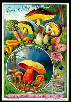 Liebig S631 - Mushrooms #2 | Flickr - Photo Sharing!