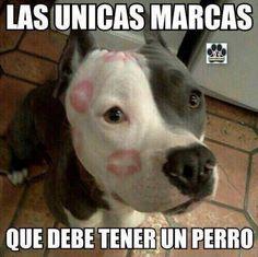 Amor y Respeto x Los Animales