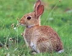 Afbeeldingsresultaat voor konijn