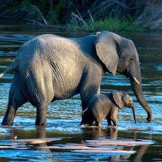 Love the elephants!