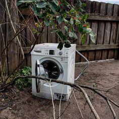 Om man är riktigt tyst kan man ibland se de vilda tvättmaskinernab när de lurar på sitt byte...