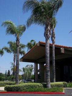 Calvary Chapel Downey, California