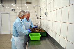 Hodowla przetwórstwo ślimaków - materiał zarodowy! - Nowość w Snails Garden! Z pola na Twój stół!