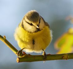 Another cute bird you will love ღ