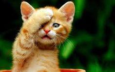 Google Teen mačička