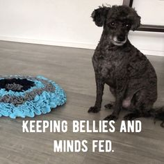Learning A Few Dog And Puppy Training Tips Will Help – Puppy Train Dog Training School, Training Classes, Training Videos, Training Tips, Crate Training, Potty Training, Agility Training, Training Academy, Toilet Training