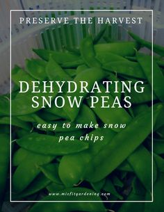 Preserve snow peas with a dehydrator to make delicious snow pea chips. Click to find out how to get started or pin it to save for later.