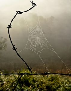 Fine art by Man (barbed wire in sculptural form), Spider (for the gossamer beauty and antithesis of barbed wire in an eternal push pull of opposites), and Nature (for the gorgeous backdrop)