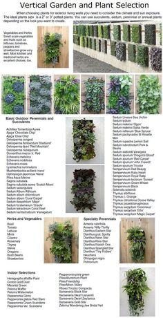 Welke planten doen het goed op of langs een muur.