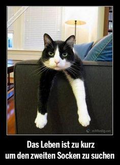 Das Leben ist zu kurz um den zweiten Socken zu suchen (Tiere Bilder) - Tags: fell, fellzeichnung, pfote, socke, socken, suchen