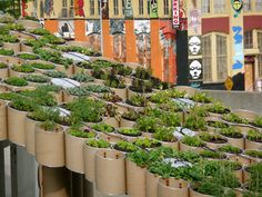 Urban agriculture. Agriculture is everywhere and were always finding new ways and places to do AG. :D