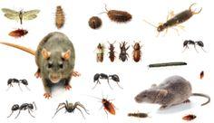 Pest Control Pros 1001 Southwest 5th Avenue 1100 Portland, OR 97204 503-436-5620